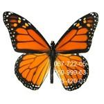 бабочка небольшая Монарх