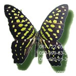 бабочка мелкая Агамемнон