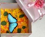 подарить живую бабочку (Голубая Морфида)