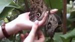 живые бабочки фото