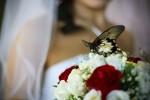 живые бабочки на свадьбу