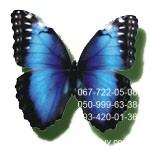 Больша бабочка Голубая Морфида