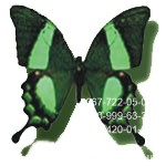 бабочка небольшого размера, Павлин, купить в Днепре