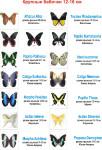 ассортимент живых бабочек-Крупные