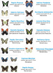 ассортимент живых бабочек-Мелкие